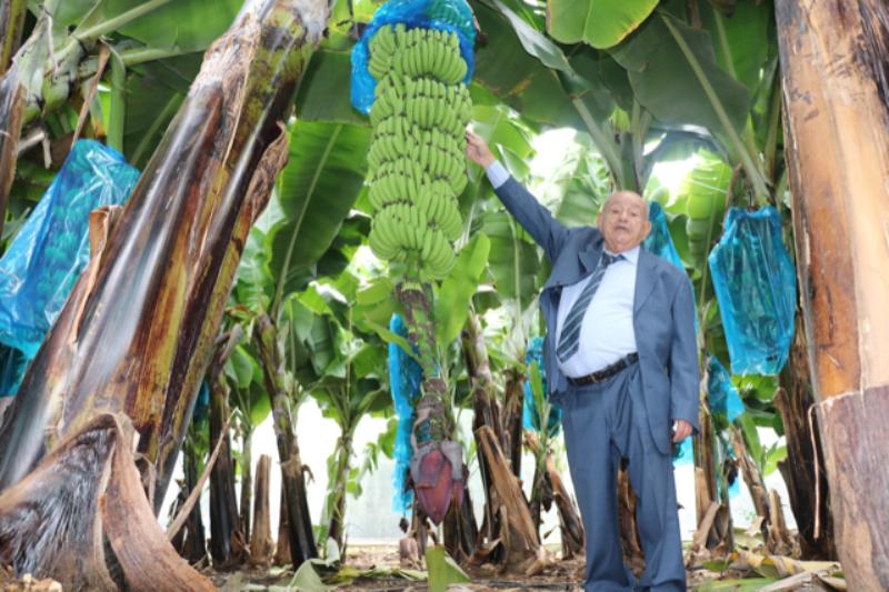 مزارع عثر في بستانه في قدموس على أطول قطف موز: 4 أمتار و80 كيلوغراماً