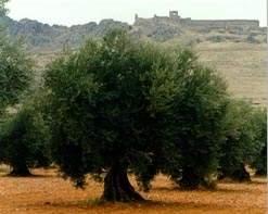 ورشة إرشادية عن أمراض اشجار الزيتون في الدوير-النبطية