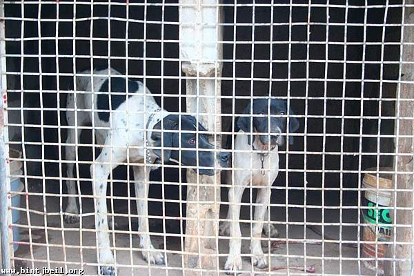 عصابات سرقة الكلاب تنتشر في  بنت جبيل