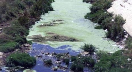 فضلات طعام المتنزهين تغطّي مياه الليطاني