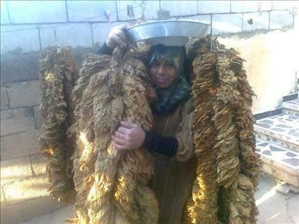 مزارعو التبغ يجددون مطالبهم