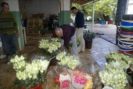 مـزارعو الـورود فـي المتـن الأعلـى يطالبون بحمايـة إنتاجهـم
