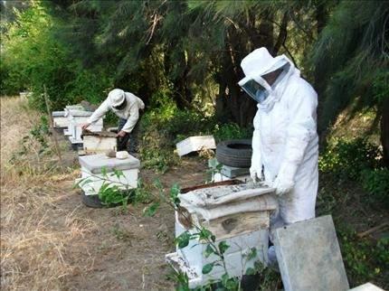 العوامل المناخية المتقلبة تؤدي إلى «اختفاء النحل» في الضنية