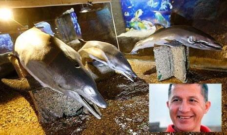 متحف جديد في جعيتا: الحياة البرية والبحرية