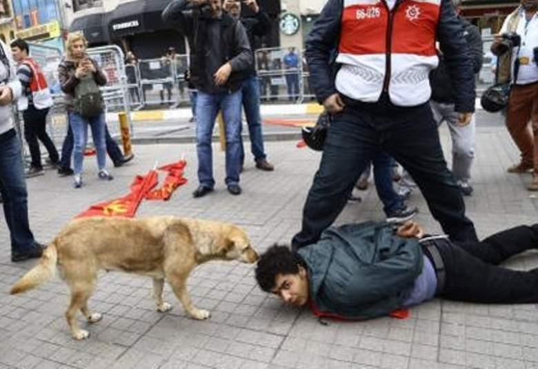 كلب يشعل مواقع التواصل في تركيا