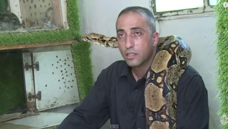 """بالفيديو : فلسطيني يهرع اليه الناس """" للتداوي من الافاعي """""""