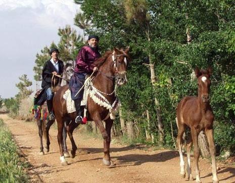 مزارع الخيول العربية في بعلبك: الخير معقود في نواصيها