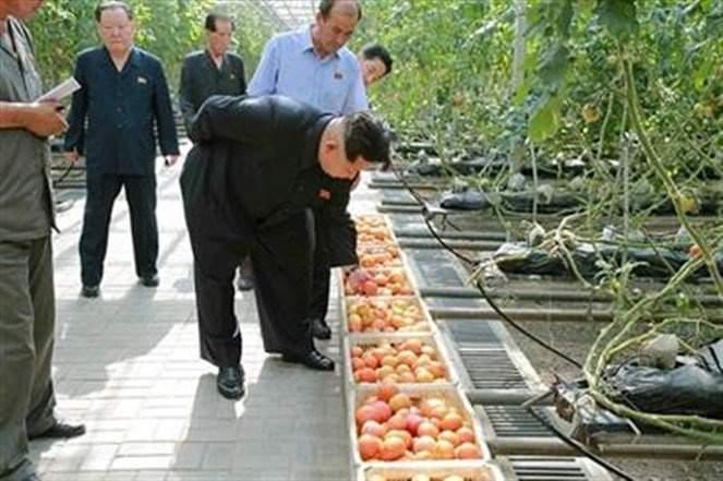 """""""كيم جونغ"""" يفحص الخضروات ميكروسكوبياً قبل تناولها"""