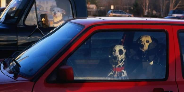 ولاية أمريكية تسمح بكسر نوافذ السيارات بعد وضع قانون غريب