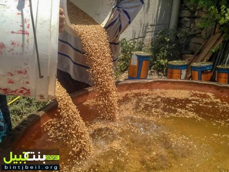 موسم سلق القمح ينطلق في القرى و البلدات الريفية اللبنانية