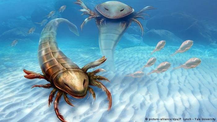 علماء يعثرون على أقدم وأكبر عقرب مائي في العالم!