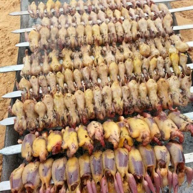 بالصور / موسم صيد عصفور التين ينطلق في لبنان.. وجبة غنية والطرائد بالالاف !