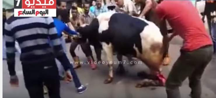 فيديو مروع للحظة تعذيب وذبح عجل بطريقة وحشية