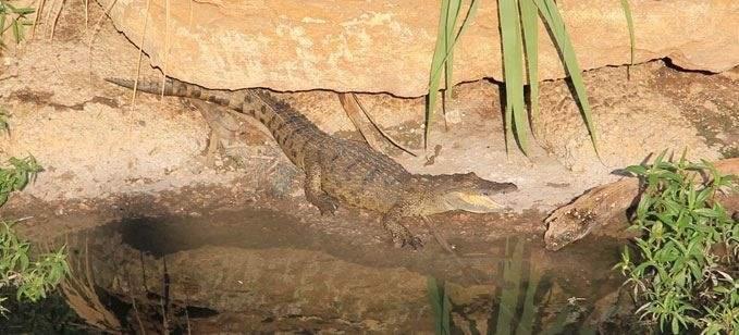 هل تذكرون تمساح نهر بيروت.. هذا جديده