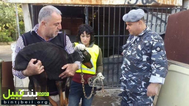 تحرير أربعة كلاب محتجزة في عقار مختوم بالشمع الأحمر في صيدا