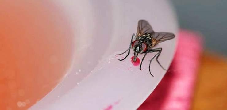 هل سئمتم من الذباب الذي يطير حولكم في كافة أرجاء المنزل؟ إليكم الحل !