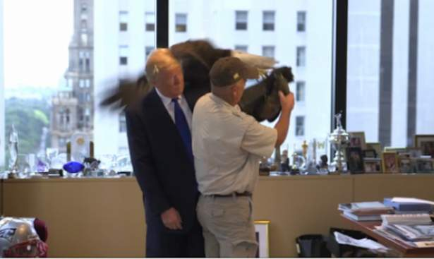 """فيديو"" .. ""نسر"" يهاجم ""ترامب"" داخلَ مكتبه !"