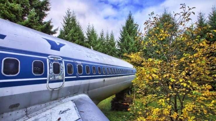 فيديو  كيف استفاد رجل من طائرة سقطت في الغابة ؟