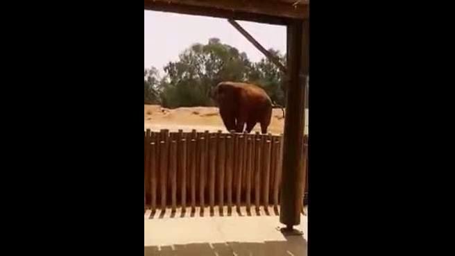 فيل يقتل طفلة عمرها 7 سنوات في حديقة الحيوانات بالرباط