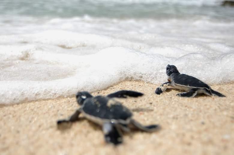 بالصور/ هذه الحيوانات قد لا تراها الأجيال القادمة!