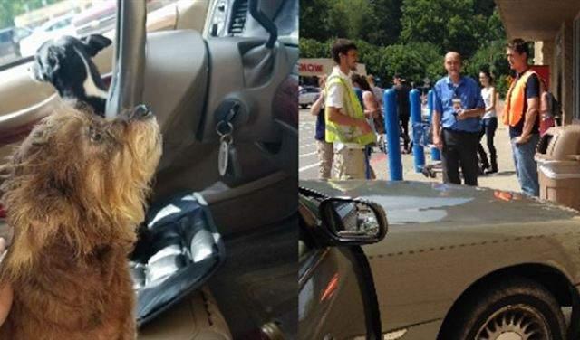 في الولايات المتحدة.. الكلاب أيضا يمكنها سرقة السيارات