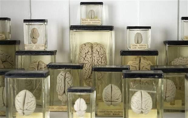 بريطانيا تسلم بلجيكا 3 آلاف عينة مخ!