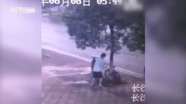 بالفيديو/ قطع شجرة لسرقة دراجة مربوطة بجذعها