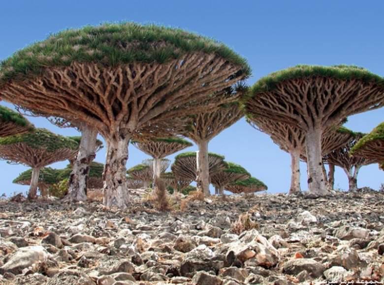 """الجمال """"الفضائي"""" لجزيرة سقطرى اليمنية"""