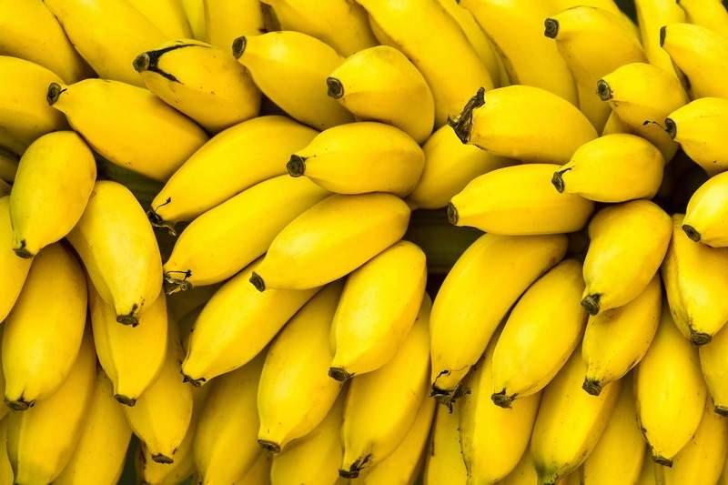 الموز مهدّد بالانقراض..وهذا هو السبب