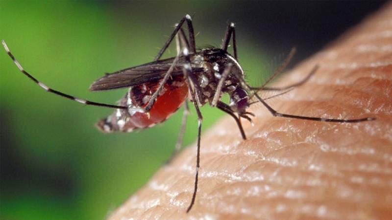 حلٌ جديد للقضاء على البعوض باستخدام جسم الإنسان