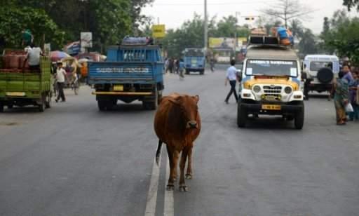 شريط عاكس للضوء على قرون الأبقار في الهند لتجنب حوادث السير