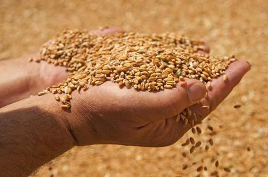 قضية مطاحن لبنان الحديثة: تقرير وزارة الزراعة «مزوّر»!