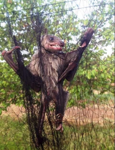 العثور على خفاش عملاق في رأس بعلبك
