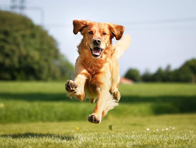 الكلاب تفهم معنى بعض الكلمات التي يقولها البشر!