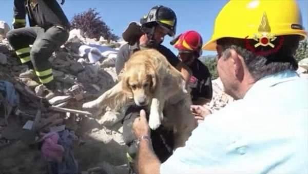 بالفيديو/ إنقاذ كلب بعد 10 أيام من زلزال إيطاليا