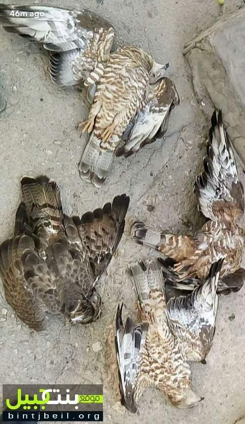 مجزرة بواشق في لبنان.. ولا من يحاسب !