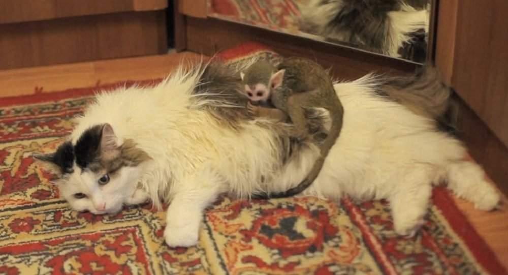 بالفيديو/ قطة تتبنى قردا صغيراً تخلت عنه أمه