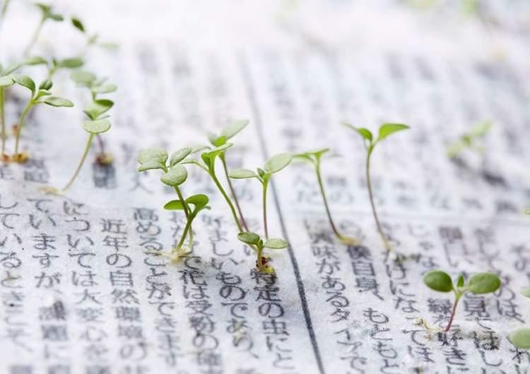 بالصور/ صحيفة يابانية تتحول إلى نباتات بعد قراءتها