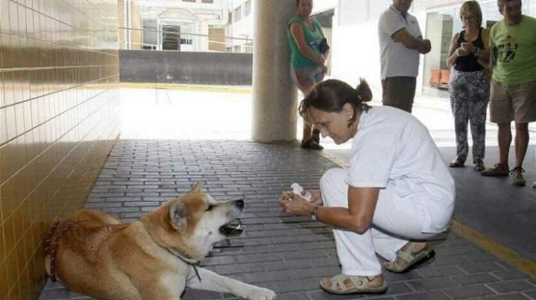 كلبة تمضي ستة أيام أمام المستشفى بانتظار صاحبتها