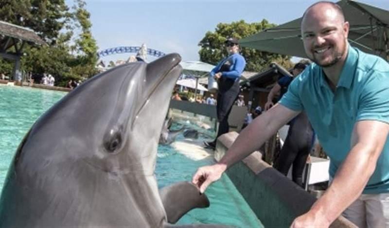 الدلافين تتحدث لغة عالية التطور أشبه بلغة البشر..