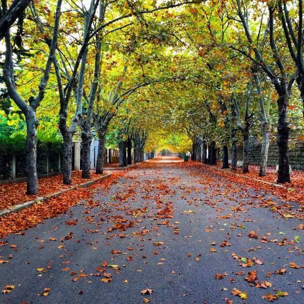 فصل الخريف يبدأ الخميس ويستمر لمدة 89 يوم و20 ساعة و23 دقيقة