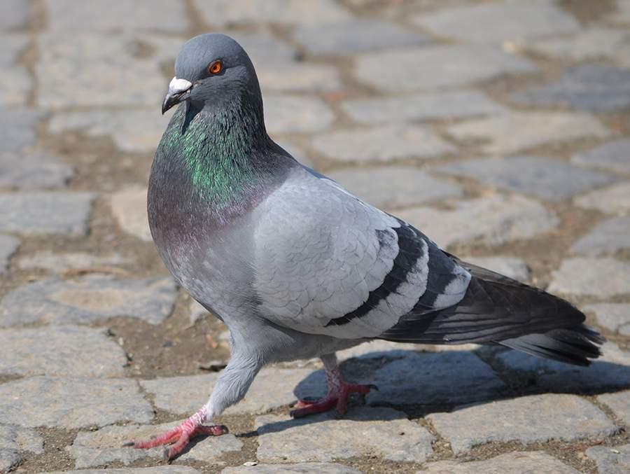 بسبب رسالة تهديد إلى الهند...هذا الطائر في السجن حتى انتهاء التحقيق!
