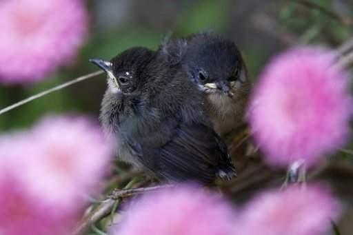 أكثر من مئتي فصيلة طيور تواجه خطر الإنقراض غير مدرجة على قوائم الأجناس المهددة