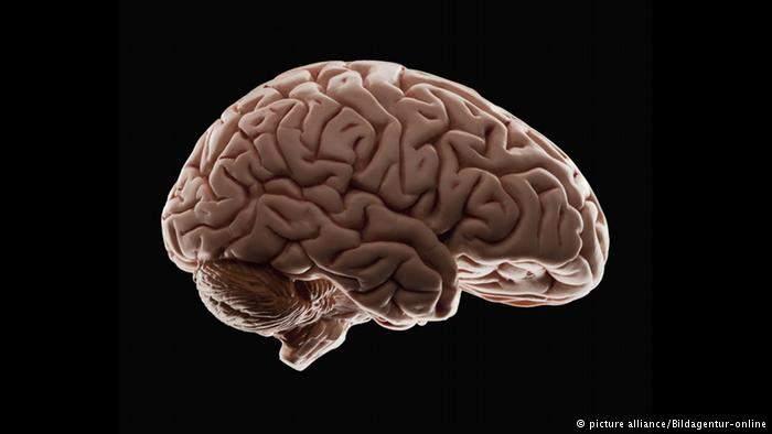 تحذير...مواد تقتل خلايا المخ وتضعف نموه