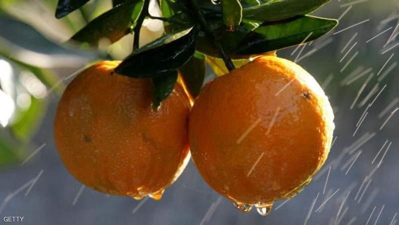 الجزائر... برتقال مسموم بطريقة غريبة