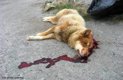 بالفيديو / حيوان بشري يعذب كلباً حتى الموت على طريق خلدة !