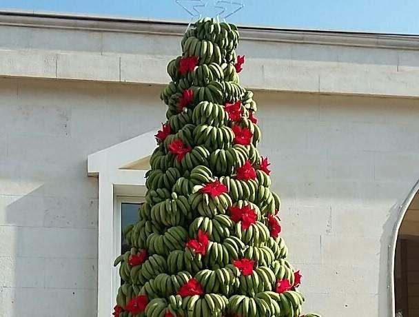 """""""شجرة الموز"""" الميلادي.. في الدامور"""