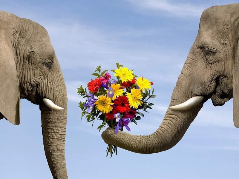 لماذا يمكن لـ الفيلة أن تسمع من أقدامها؟