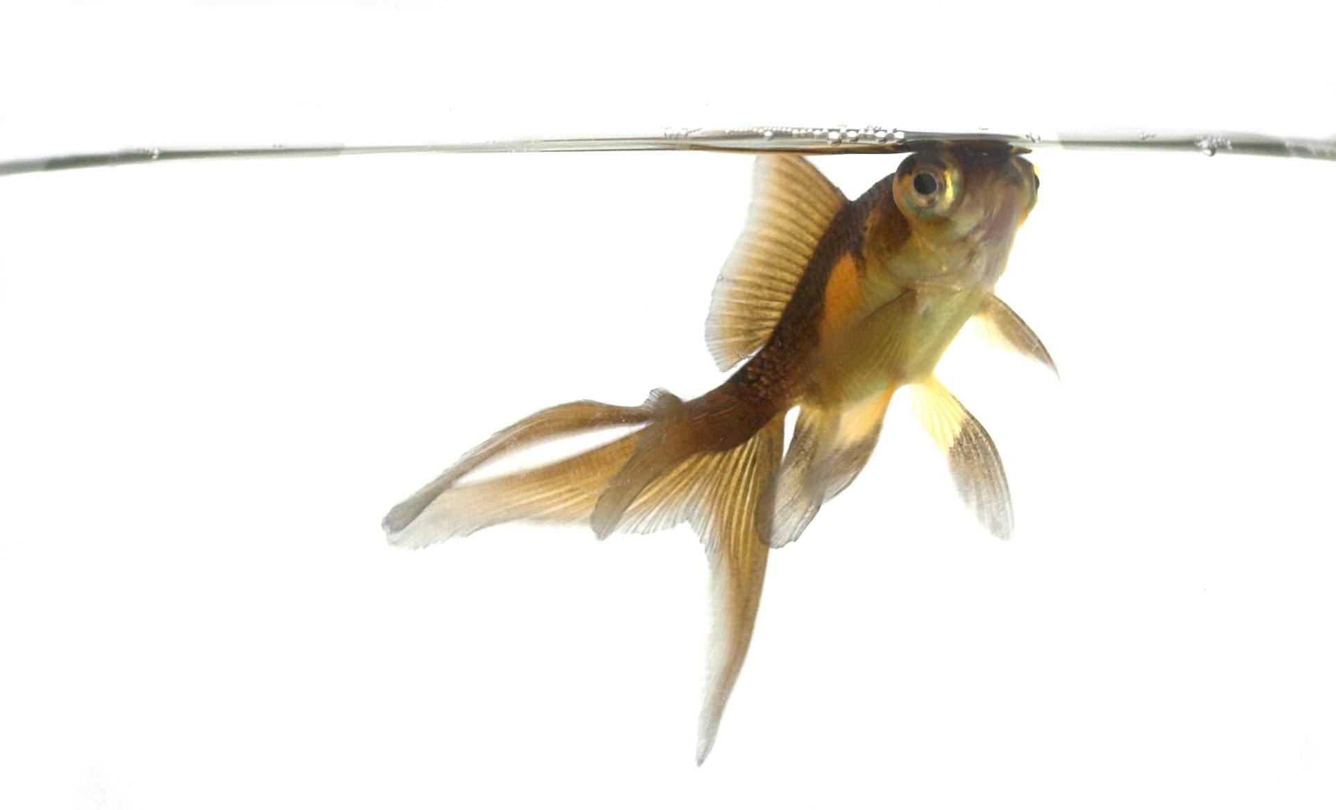 هل يشعر السمك بالعطش؟!
