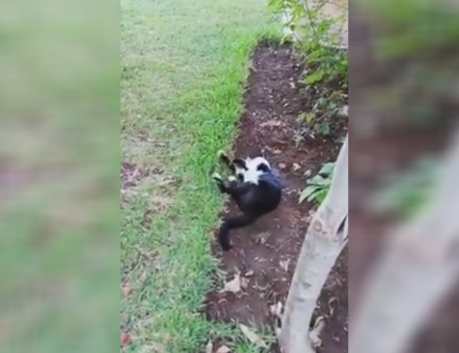 فيديو متداول... في إحدى المناطق اللبنانية مادة سامة جعلت قطة تنازع حتى الموت